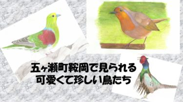 五ヶ瀬町鞍岡で見られる珍しくて可愛い野鳥たち