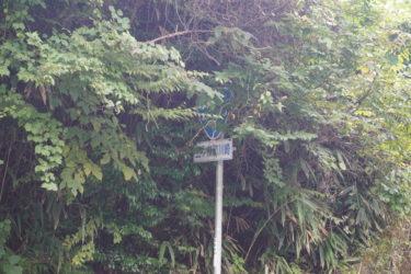 五ヶ瀬町鞍岡地区川崎の滝!水が流れていなくとも想像しろ、幻の滝を!